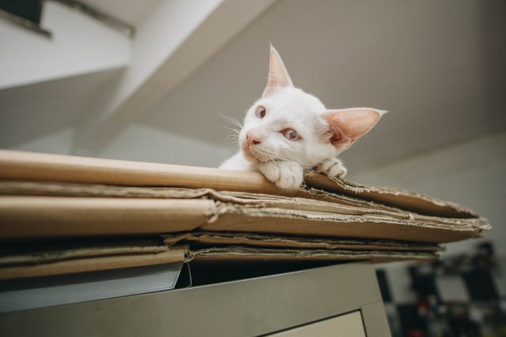white kitten on brown folded cardboard boxes
